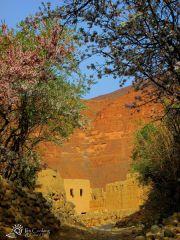morocco-amellago-almond-blossoms