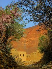 morocco-amellago-almond-blossoms