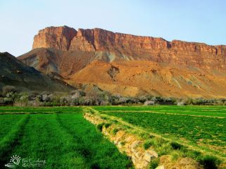 morocco-amellago-fields