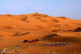 morocco-camel-berber-camp